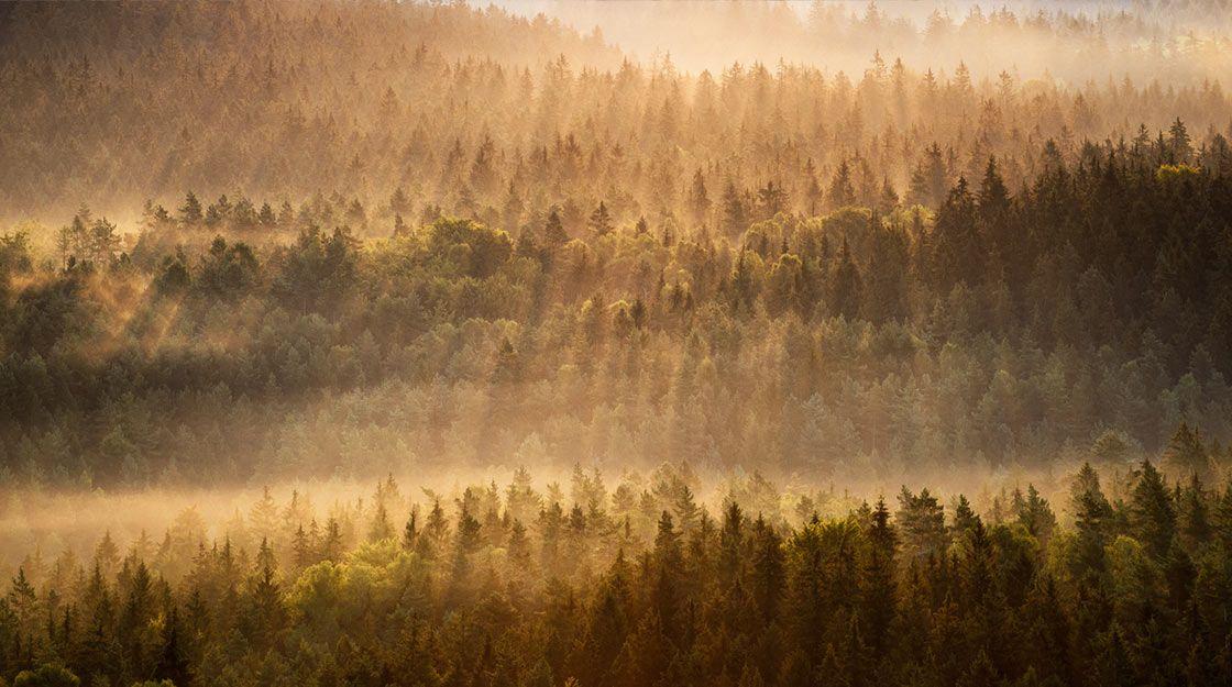 Klimaschutz braucht Holz